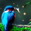 Bird avatars
