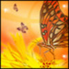 Butterfly avatars