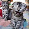 Animals Avatars Cat