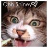 Cat avatars