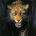Animals Avatars Cheetah