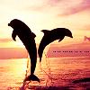 Dolphins avatars