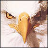 Eagle avatars