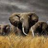 Elephant avatars