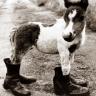 avatars-horses-417673.png