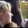 Horses avatars