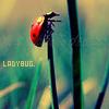 Ladybug avatars