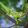 Animals Avatars Lizard