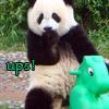 Panda avatars