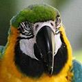 Parrot avatars
