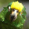 Animals Parrot Avatars