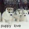 Animals Avatars Puppy