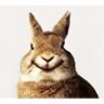 Rabbit avatars