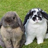 Rabbit avatars