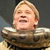 Snakes avatars