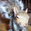 Squirrel avatars