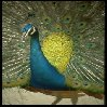 Birds avatars