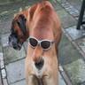 Dogs avatars