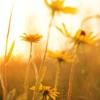 Flowers avatars