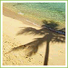 Palm tree avatars