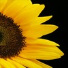 Avatars Sunflower