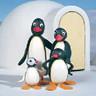 Pingu avatars