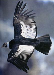 Bird graphics Bamboo