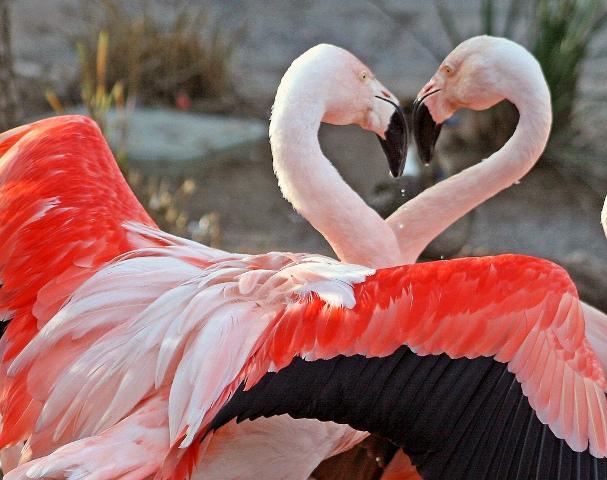 Flamingo Bird graphics