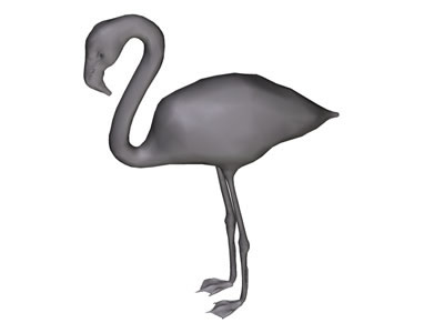 Flamingo Bird graphics