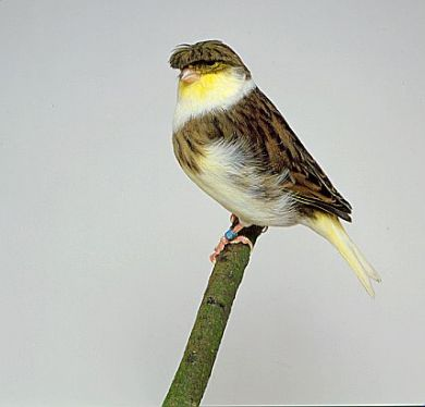 Gloster bird graphics