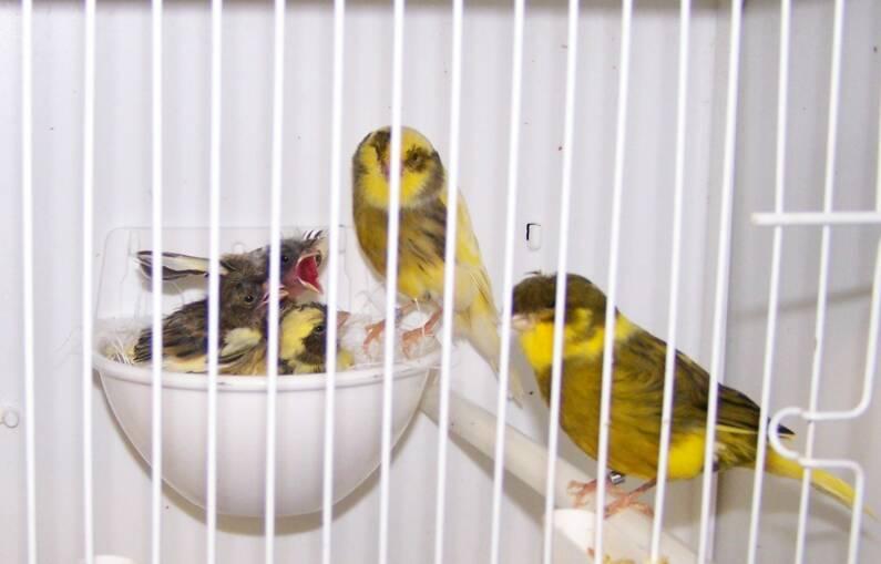 Bird graphics Gloster