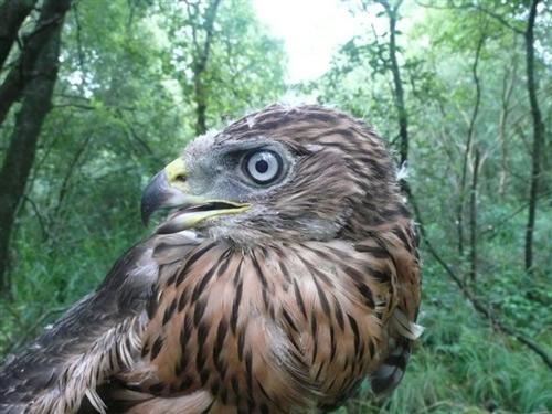 Hawk bird graphics