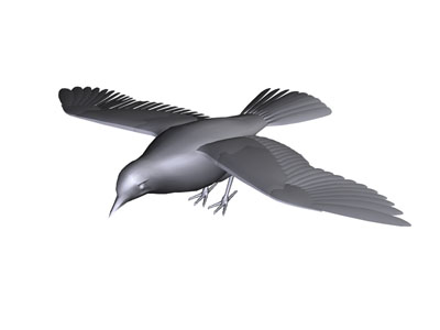 Other birds bird graphics