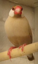 Rice bird bird graphics
