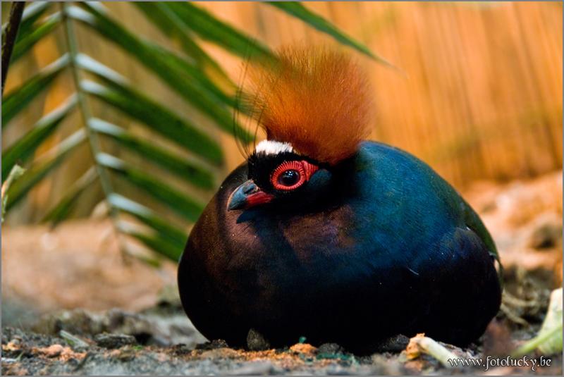 Bird graphics Roul roul