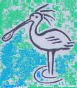 Bird graphics Spoonbill