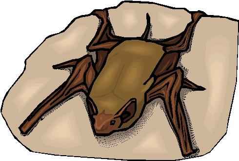 Bats clip art
