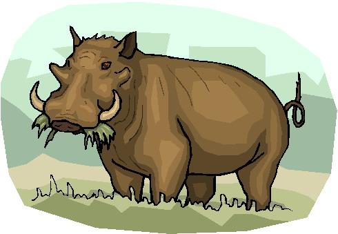 Boars clip art