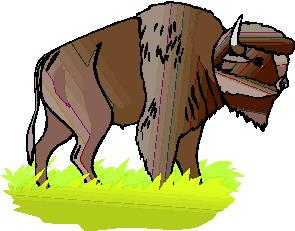 Buffaloes clip art