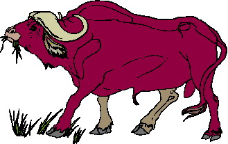 Buffaloes Clip art Farm