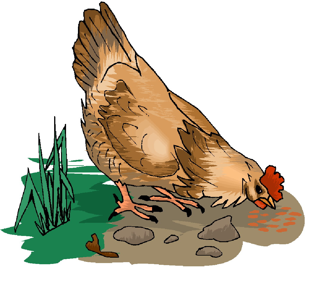 chicken clipart graphics - photo #43