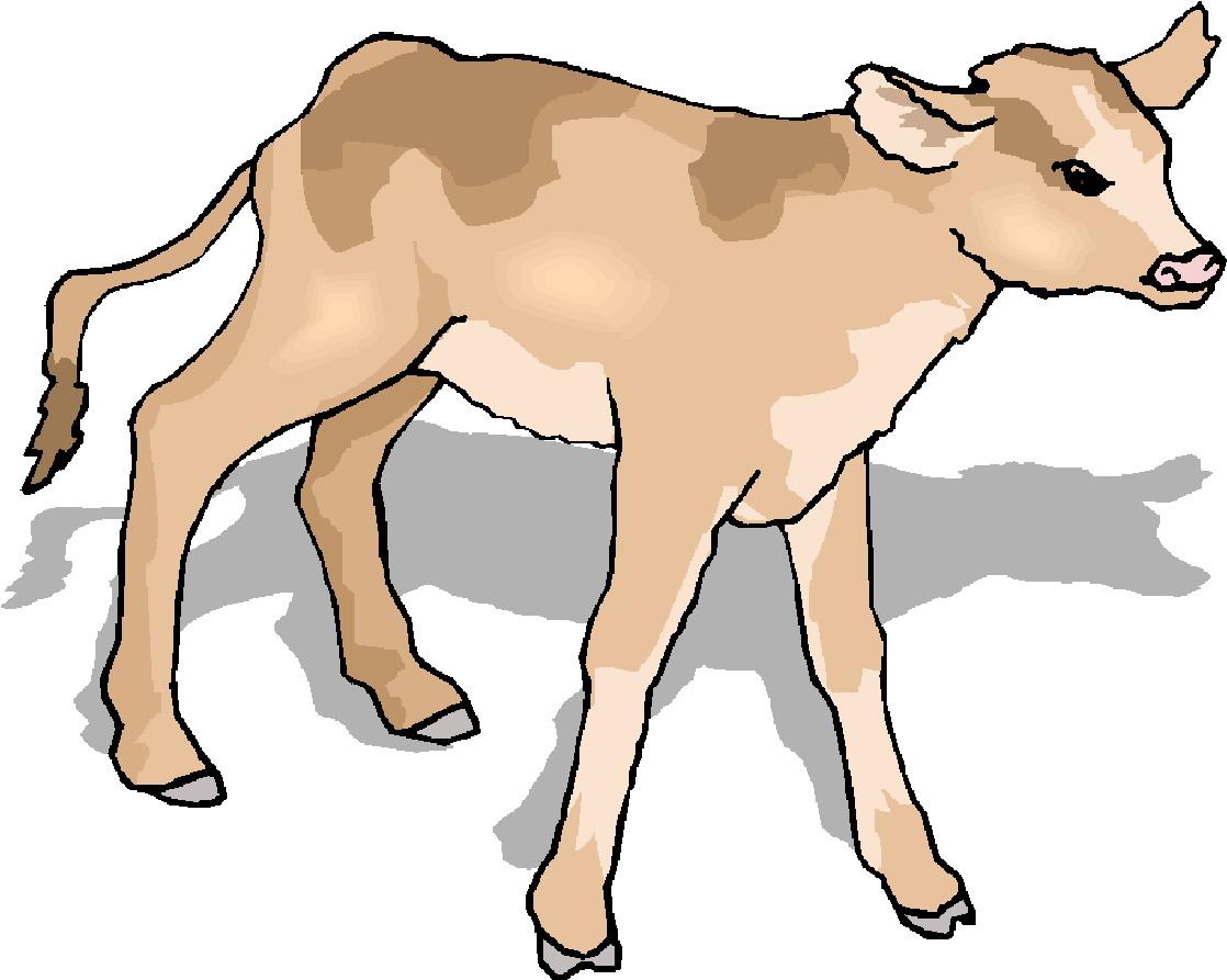 Clip art » Cows Clip art