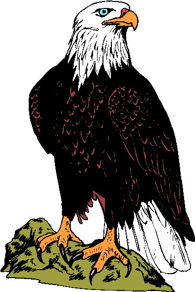 free bald eagle clipart - photo #43