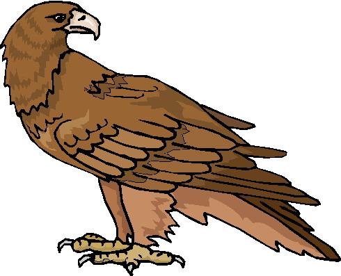 Clip art » Eagle Clip art