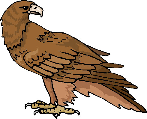 Clip art » Eagle Clip art: www.picgifs.com/clip-art/eagle/&p=3
