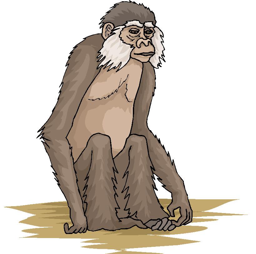 Monkeys clip art