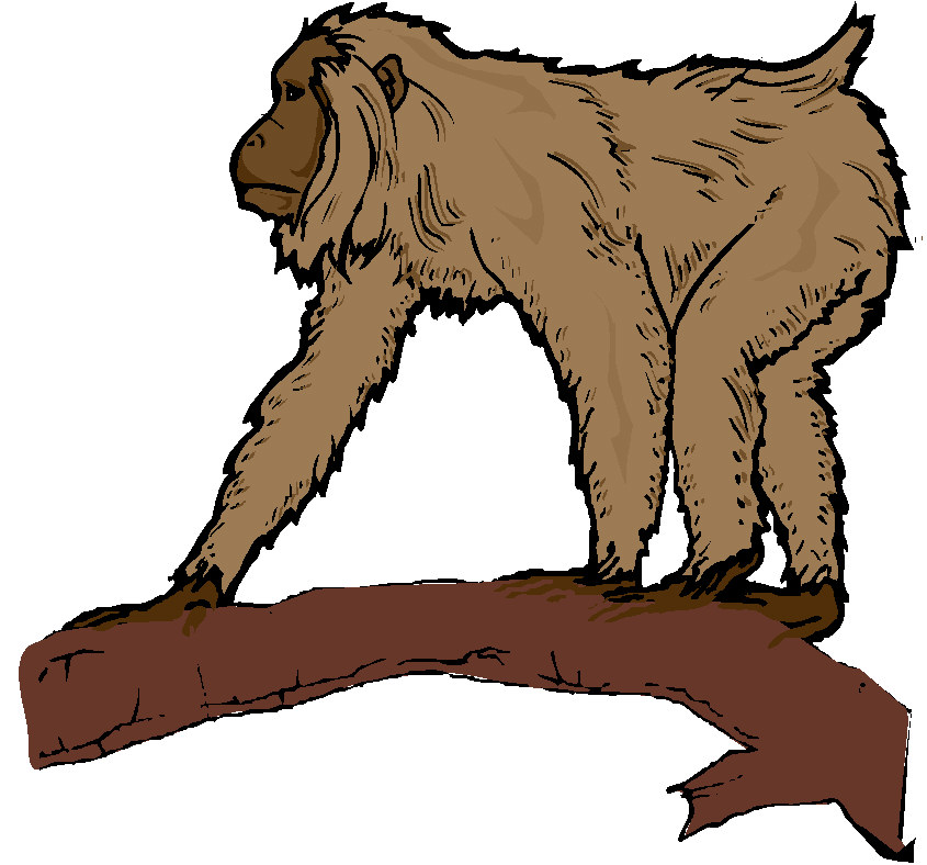 clipart image of monkey - photo #40