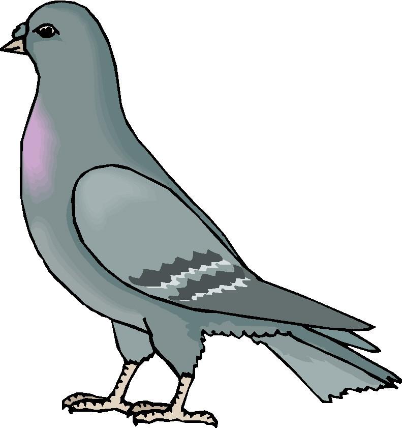 pigeons clip art picgifs com rh picgifs com flying pigeon clipart pigeon clip art black and white