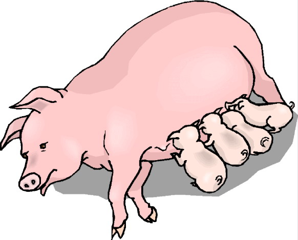 pigs clip art farm picgifs com rh picgifs com clipart of pig butts clip art of pigs and cows