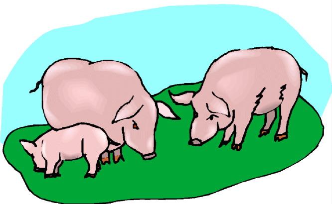 pigs clip art farm picgifs com rh picgifs com pig clipart png pig clipart png